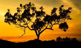 Baum auf Feuer Lizenzfreies Stockfoto