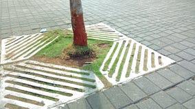 Baum auf Fußweg Lizenzfreie Stockfotografie
