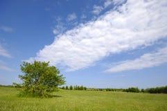 Baum auf grünem Feld Stockfoto