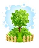 Baum auf grünem Rasen mit hölzernem Zaun Lizenzfreies Stockfoto