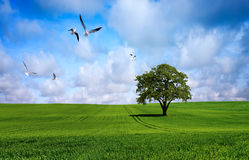 Baum auf grüner Wiese Stockfoto