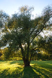 Baum auf grasartigem Hügel Lizenzfreie Stockfotografie