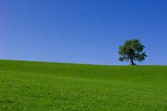 Baum auf Hügel Lizenzfreie Stockfotos