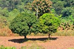 Baum auf Hügel Lizenzfreie Stockfotografie
