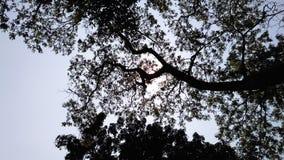 Baum auf Himmel stockfotos