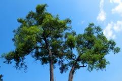 Baum auf Himmelhintergrund Stockfotos