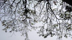 Baum auf Himmelschattenbild 1 lizenzfreie stockbilder