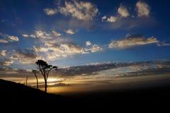 Baum auf Hintergrund des blauen Himmels Lizenzfreies Stockbild