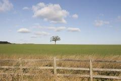 Baum auf Horizont lizenzfreie stockfotografie