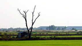 Baum auf Landschaft lizenzfreies stockbild