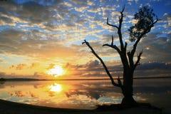 Baum auf ruhigem See Stockfoto