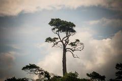Baum auf sauberem blauem Himmel stockfotografie
