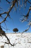 Baum auf schneebedecktem Feld Lizenzfreie Stockbilder