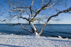 Baum auf See Stockbild