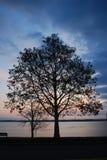 Baum auf Seneca See am Sonnenaufgang lizenzfreies stockfoto
