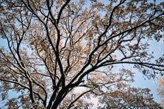 Baum auf Sonnenaufgang im November Lizenzfreie Stockfotos