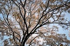 Baum auf Sonnenaufgang im November Stockfotos