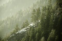 Baum auf Sonnenaufganghintergrund im Hochgebirge Lizenzfreie Stockbilder