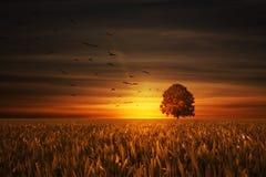 Baum auf Sonnenuntergang Lizenzfreie Stockfotos