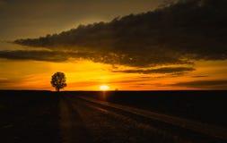 Baum auf Sonnenuntergang Stockfotografie