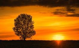Baum auf Sonnenuntergang Lizenzfreie Stockbilder