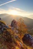 Baum auf Sonnenuntergang im Berg Stockbild