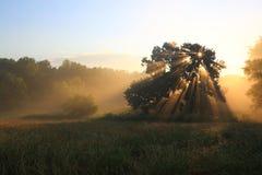 Baum auf sonnigem Hintergrund Lizenzfreie Stockbilder