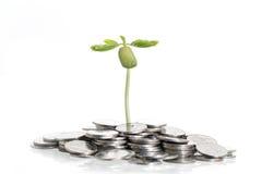Baum auf Stapel von Münzen auf Weiß Stockfotografie