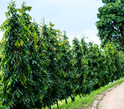 Baum auf Straßenrand Lizenzfreies Stockbild