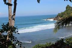 Baum auf Strand in Indonesien Stockbild