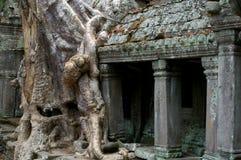 Baum auf Tempel Stockbild