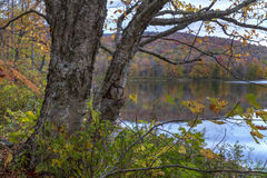Baum auf Ufer von großem Teich Stockfoto