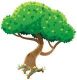 Baum auf Weiß Lizenzfreie Stockfotografie