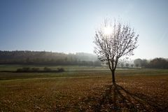 Baum auf Wiese im contre-jour mit Dunst stockfotos