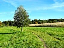 Baum auf Wiesenpfad Stockbild