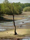 Baum aufgrund von einem See lizenzfreie stockfotos