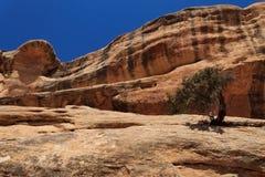 Baum aus Felsen heraus Stockfotos