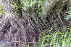 Baum avobe alles Stockfotos