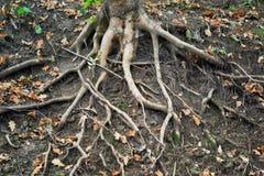 Baum avobe alles Stockfoto