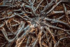 Baum avobe alles Lizenzfreies Stockbild