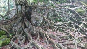 Baum avobe alles Lizenzfreie Stockfotografie
