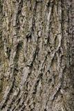 Baum-Barke Stockbild
