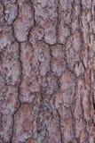 Baum-Barke Lizenzfreies Stockbild