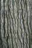 Baum-Barke. Stockbild