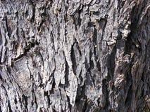 Baum-Barke Stockfotografie