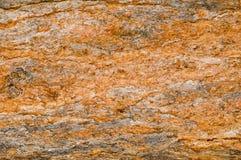 Baum-Barke-Hintergrund Lizenzfreies Stockfoto