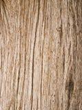 Baum-Barke und Ameisen Lizenzfreies Stockbild
