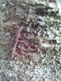 Baum Barki Lizenzfreie Stockbilder
