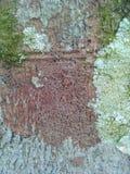 Baum Barki Stockbilder