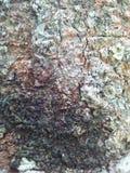 Baum Barki Stockfotografie